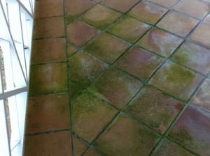ejemplo de suelo con moho